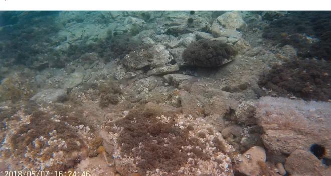 underwater 2.PNG